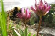 Using an inexpensive acoustic listening system to monitor bees and other insects in the field