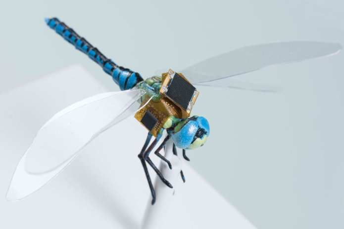 Insect cyborg dragonfly debuts - Innovation Toronto