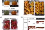 Sprayable edible nanocoating significantly extends the shelf life of produce