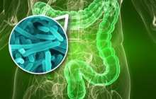 Gut bacteria as a powerful modulator of disease