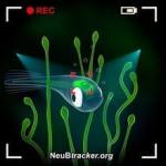 New microscope can track natural behavior while simultaneously imaging neuronal activity in the brain
