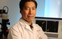 The key to generating new blood vessels?