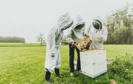 Fungicides emerge as a villain in bee decline