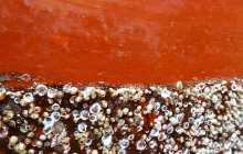 Environmentally-friendly anti-fouling coatings get much better