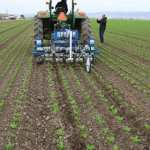 Robotic weeders are coming to a field near you