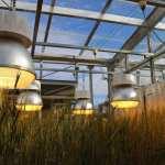 New green revolution set to start with speed breeding