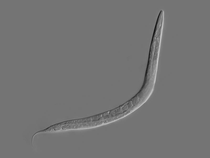 A natural worm's neural system, translated into code and uploaded to become a virtual worm, is taught amazing tricks
