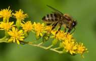Could this scientific breakthrough lead to bee-friendly pesticides?