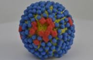 A new target for influenza could offer broad protection against various influenza virus strains and lessen the severity of illness