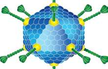 Could Adenovirus be used to treat cancer?