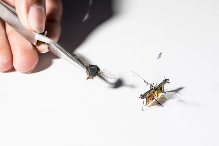 The first wireless flying insect robot is powered by a laser for now