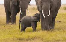 Is trophy hunting an acceptable and effective tool for wildlife conservation?