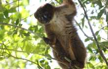 New facial recognition software and app can help protect endangered primates