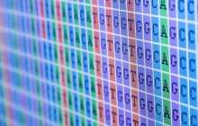 Gene editing technology gets more accessible and simpler to implement