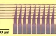 A full-blown optical neural network chip