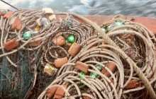 Reduce seabird death toll from fishing by 85 per cent by using LED lights