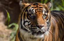 Saving the tiger with a profiling tool used to catch serial criminals