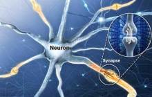 Simulating the function of the human brain with an artificial electronic synaptic device