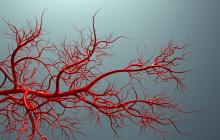 Fasting or caloric restriction can have anti-aging effects on the vascular system