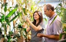 A key step in improving agricultural efficiency and yield in corn
