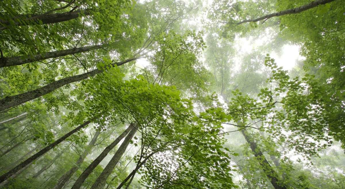 U.S. forests, wetlands and agricultural lands could absorb one-fifth of greenhouse gas pollution — equivalent to emissions from all U.S. vehicles