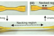 New material becomes stronger in response to mechanical stress – mimicking skeletal muscle growth