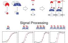 Synthetic biologists have added high-precision analog-to-digital signal processing to the genetic circuitry of living cells