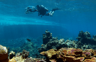 How coral reefs recover after bleaching