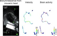 Taking social neuroscience to the next level with a new cable-free brain imaging method