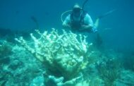 The fight to preserve coral reefs requires local, not just global, action