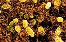Opening a door to new bioactive healing strategies