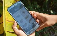 A new smartphone AI tool can detect banana diseases and pests with 90 percent accuracy