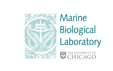 Marine Biological Laboratory (MBL)