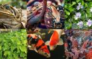 Outlining the increasing threats posed by invasive species