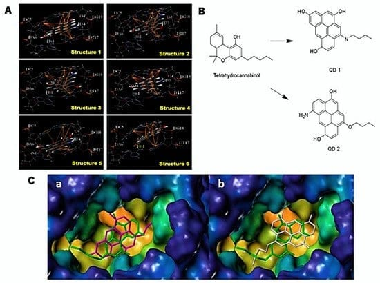 """(A) Hydrogen bonding and ?-? interactions between AG-QDs with DNA at select binding sites. Green dotted lines show H-bonds between AG-QDs and basic groups, purines and pyrimidines. Yellow lines show ?-? interactions between AG-QDs and basic groups (cytimidine, guanine, adenine, and thymine). Carbon, oxygen, hydrogen, and nitrogen are colored in grey, red, white, and blue, respectively. (B) Comparison of the structures of Marijuana and designed Quantum dots. The formation of the cQD from marijuana results in a greater number of sp2 carbons. In turn, this will increase the hydrophobicity of the designed ligand and thereby increase lipophilic interactions with the CB1 receptor for hydrophobic binding subsites near CB1. It also not only makes the cQD a better free radical scavenger but also assists in tracking (via fluorescence imaging). (C) Docking of Tetrahydrocannabinol(green), and designed Quantum dots (generated """"in silico"""" to potentially bind to the CB1 receptor) in CB1 receptor a) Tetrahydrocannabinol (green) and QD 1 (pink) b) Tetrahydrocannabinol (green) and QD 1 (white). The """"cQD""""s were docked through CB1 crystal structure (PDB:5TGZ) using SYBYL-X with Surflex-Dock program. Both QD1 (pink), and QD2 (white) were superimposed very well in CB1 binding site, compared to Tetrahydrocannabinol (green). The pockets were filled such that the free energy reached a minimum value effectively (suggestive of a global minima). A part of this Figure is adapted from [5]."""