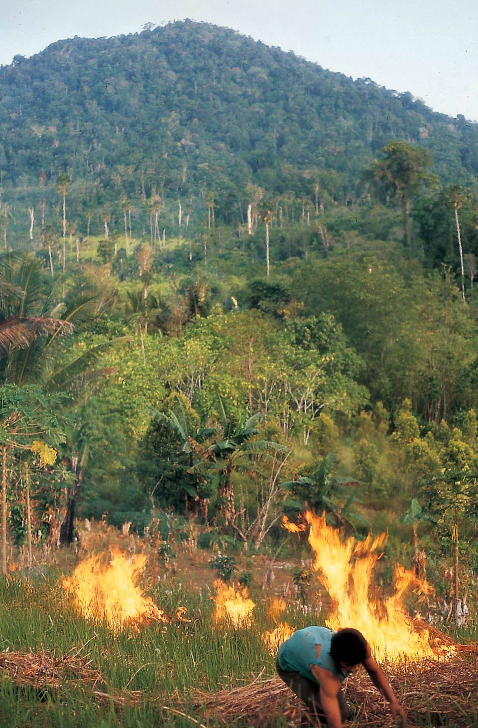 Deforestation is largely responsible for two of the four novel viruses to emerge in the past 50 years: Ebola and SARS. Part of preventing the next global pandemic is creating economic incentives to end practices like the slash-and-burn deforestation seen here, argue a team of researchers in the current issue of Science. Photo by Margaret Kinnaird, WWF International