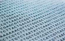 Screening entire populations for breast and ovarian cancer gene mutations could prevent millions of cancer cases