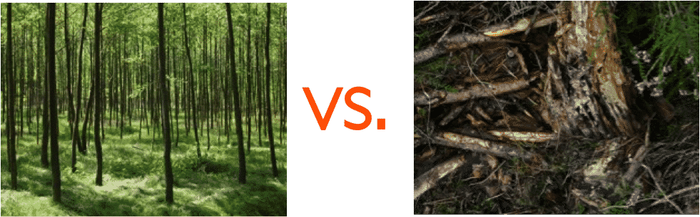 managed versus unmanaged forests