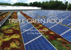 Triple Green Roof