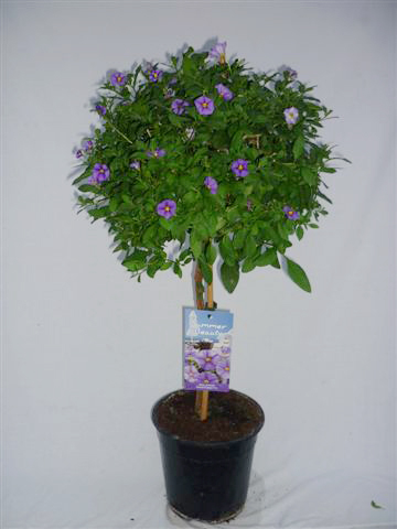 Innov Plants