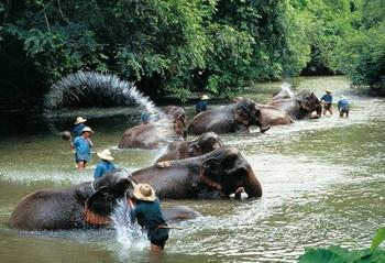 tour con gli elefanti thailandia nord - triangolo d'oro