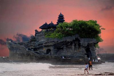 Belalang-Bali-Indonesia