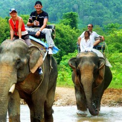 escursione a dorso di un elefante