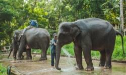 Kanchanaburi escursione con gli elefanti