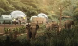 resort tra gli elefanti