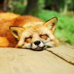 やる気が出ない・眠い・だるいときは疲れがなくなっても気が済むまで休むこと