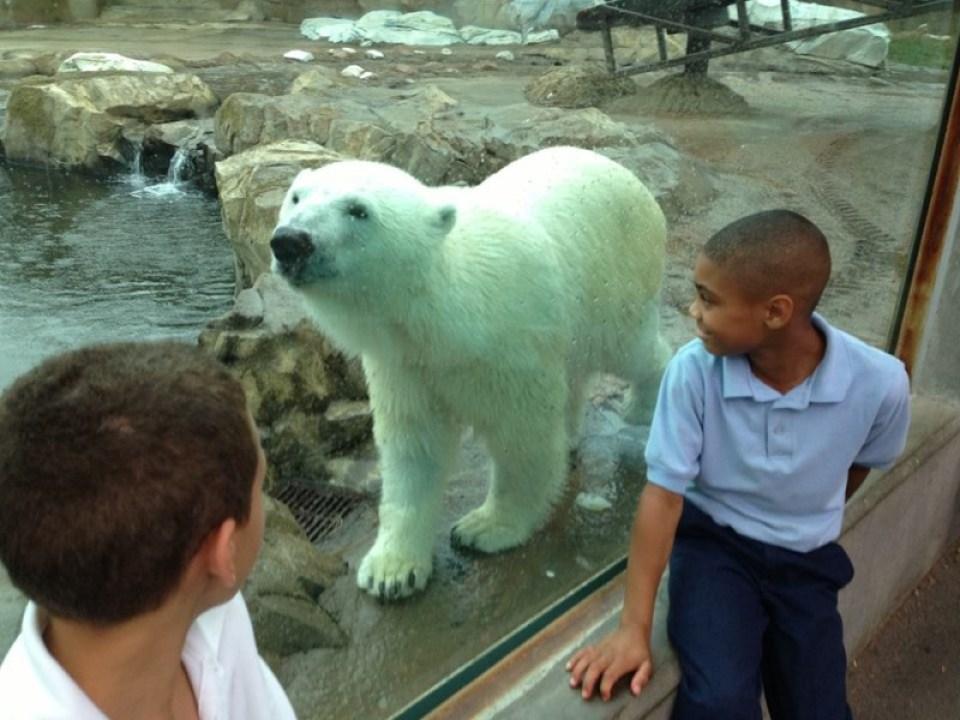 Glacier Run. Courtesy Louisville Zoo
