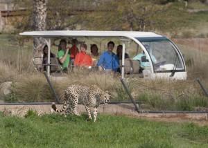 Cart Safari at the San Diego Zoo Safari Park