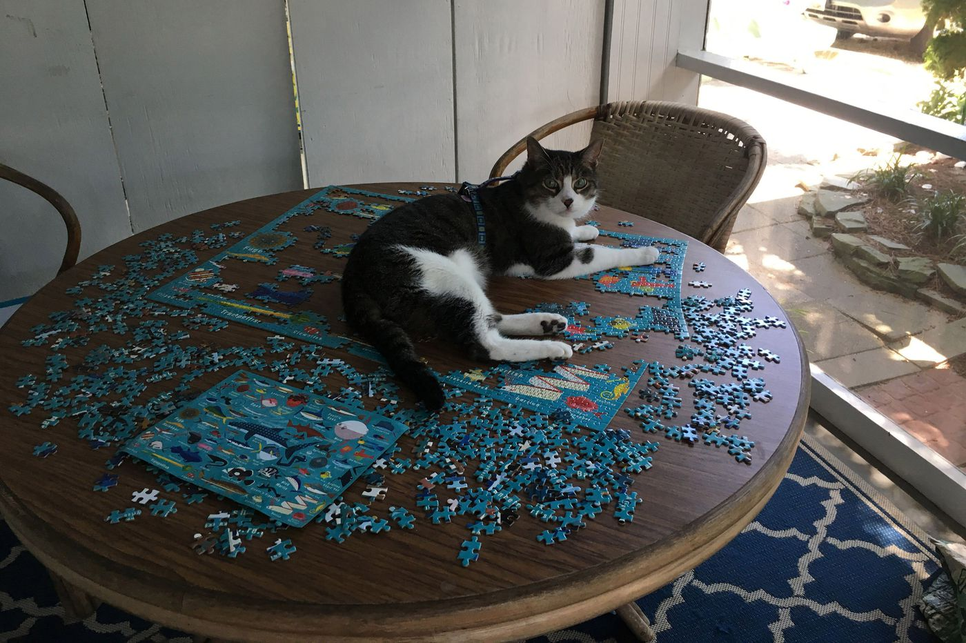 What Happened When We Took Our Cats On A Beach Vacation
