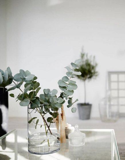 15x Eucalyptus in huis  Inrichtinghuiscom